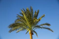 Zweige der Palmen gegen den Himmel Lizenzfreie Stockbilder