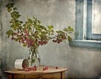 Zweige der roten Johannisbeere Lizenzfreies Stockfoto