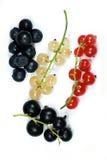 Zweige der roten, weißen und Schwarzen Johannisbeere Lizenzfreies Stockfoto