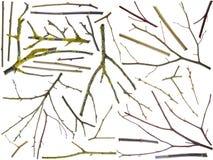 Zweige der verschiedenen Bruten des Baumsets Lizenzfreie Stockfotos