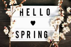 Zweige des Aprikosenbaums mit Blumen auf blauem Hintergrund Das Konzept des Frühlinges kam stockfotos