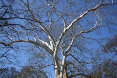 Zweige des Baums Stockbilder