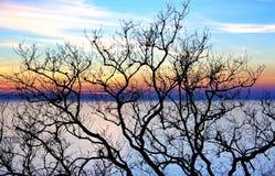 Zweige des kahlen Baums Stockfotos