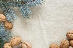 Zweige des Weihnachtsbaums und der Muttern Lizenzfreies Stockfoto