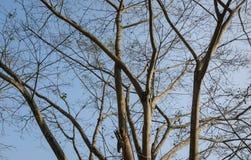 Zweige eines Baums Lizenzfreie Stockbilder