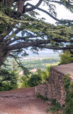 Zweige eines Baums Lizenzfreie Stockfotos