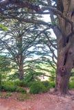 Zweige eines Baums Stockfotos