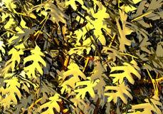 Zweige eines Baums mit Blättern stock abbildung