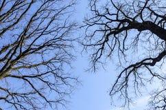 Zweige eines Baums ohne Blätter gegen den Himmel Lizenzfreies Stockfoto