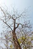 Zweige gegen blauen Himmel Stockbilder