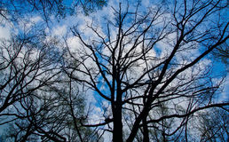 Zweige gegen blauen Himmel Stockfotografie