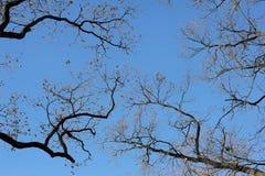 Zweige gegen den Himmel Lizenzfreie Stockfotografie
