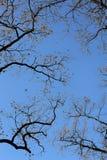 Zweige gegen den Himmel Stockbild