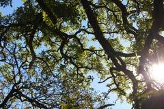 Zweige gegen den Himmel Lizenzfreie Stockbilder