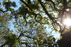 Zweige gegen den Himmel Lizenzfreie Stockfotos