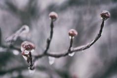 Zweige im Eis Stockfoto
