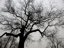 Zweige im Himmel Stockbild