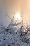 Zweige im Schnee stockbilder
