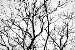 Zweige im Schwarzen auf Weiß Stockfotografie