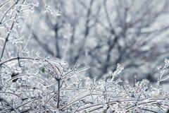 Zweige umfaßt mit Eis Stockbilder