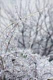 Zweige umfaßt mit Eis Lizenzfreies Stockfoto