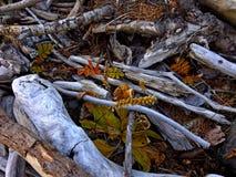 Zweige und Barke von Bäumen Stockfotos