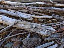 Zweige und Barke von Bäumen Stockfotografie