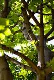 Zweige und Blätter Stockfoto