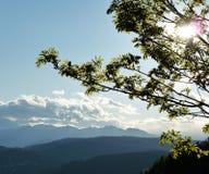Zweige und Blätter Stockbild