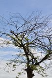 Zweige und blauer Himmel Stockbilder