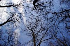 Zweige und blauer Himmel Stockfoto