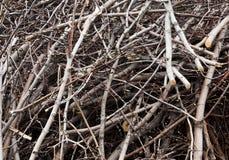 Zweige und die Stocknahaufnahme Lizenzfreies Stockfoto