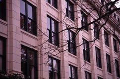 Zweige und Fenster stockbilder