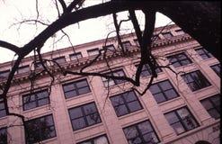 Zweige und Fenster lizenzfreie stockfotografie