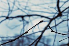 Zweige und Himmel Lizenzfreie Stockbilder