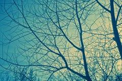 Zweige und Himmel Lizenzfreies Stockbild