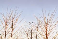 Zweige und Himmel Stockfotografie
