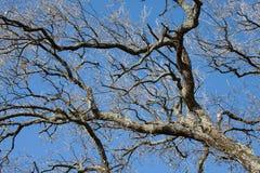 Zweige und Himmel Stockfotos