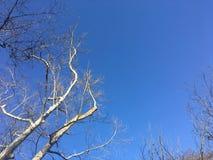 Zweige und Himmel Lizenzfreies Stockfoto