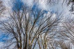 Zweige und Himmel Stockbild