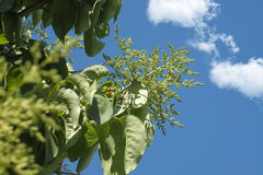 Zweige und Himmel Stockfoto