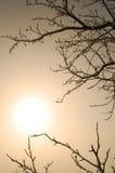 Zweige und Sonne Stockfotografie