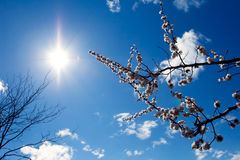 Zweige und Sonne stockfotos