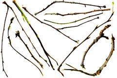 Zweige und Zweige Lizenzfreie Stockfotos