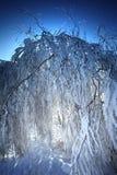Zweige unter Schnee Lizenzfreies Stockbild