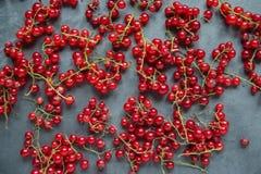 Zweige von Moosbeeren Zweige der roten Johannisbeere auf einem grauen backgroun Stockbild