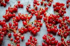 Zweige von Moosbeeren Zweige der roten Johannisbeere auf einem grauen backgroun Stockfotos