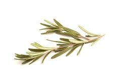 Zweige von Rosemary lokalisierten gegen Weiß stockfoto