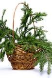 Zweigtannenbaum im Korb Lizenzfreies Stockbild