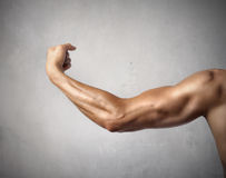 Zweiköpfiger Muskel stockbilder